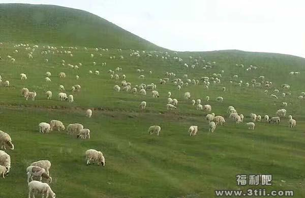 中介入室抱女房客 女孩放生六千头羊|门事件